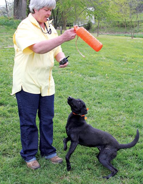 Choosing a Canine Companion