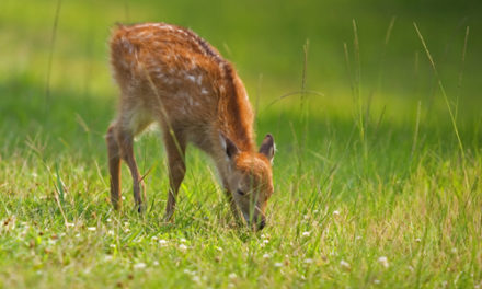 Bambi Isn't Cute Anymore