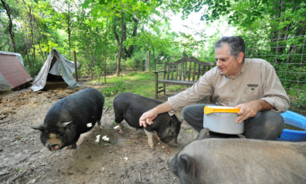 Everything You Ever Wanted to Know About Potbelly Pigs Is Only About 40 Minutes Away