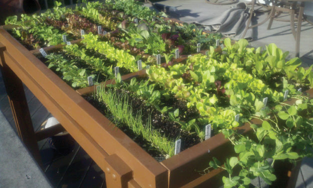 Food for Thought: Beginning Gardening Tips from Area Experts