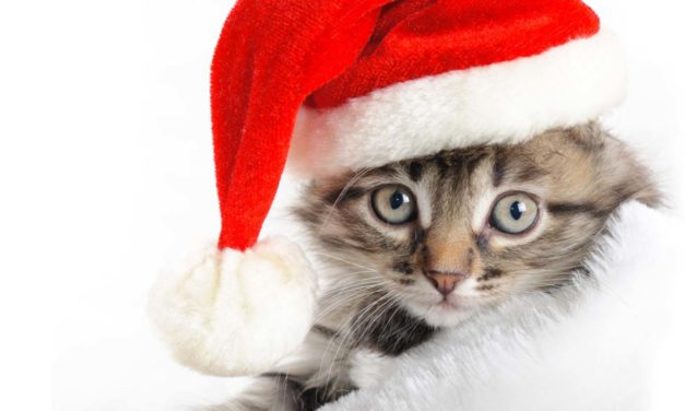 7 Tips to Keep Pets Healthy Over the Holidays