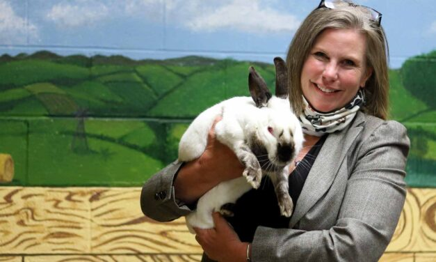 Humane Society Serves its Furry Friends During Coronavirus