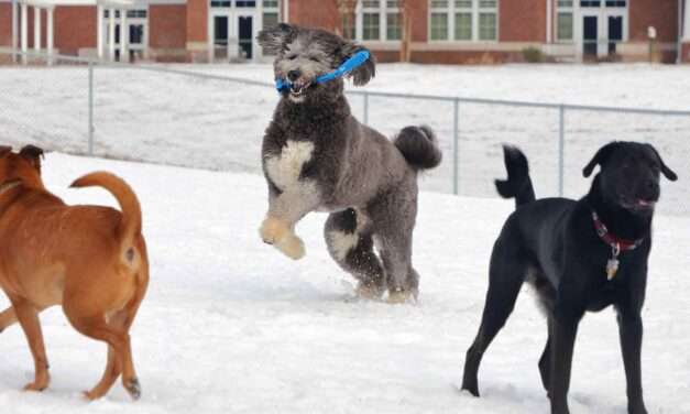 It's a Dog's Life: Dog Parks Build Friendships and Communities for Dogs and Their Humans